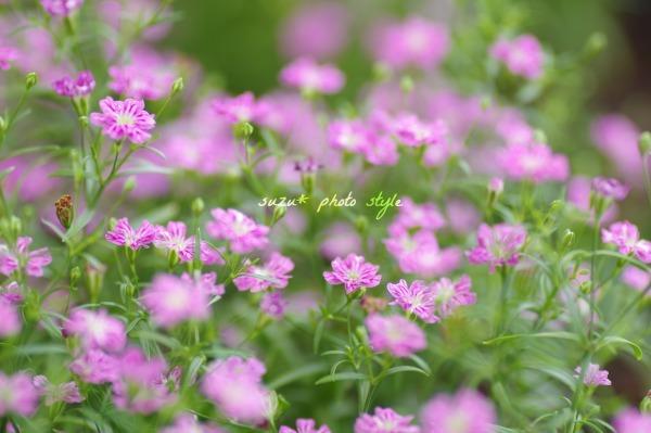 IMGP0936-6.jpg